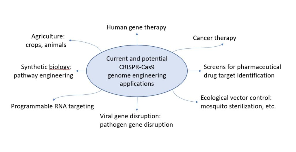 Current and potential applications of CRISPR-Cas9